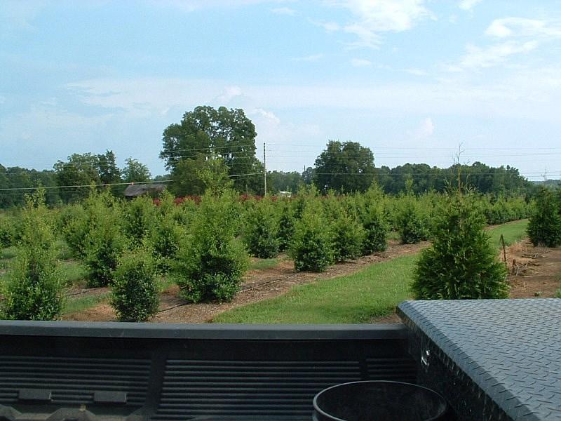 Covington Gardens Tn Garden Ftempo